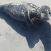 Stranded seal pup rescued after being spotted by US Coast Guard on New Jersey beach